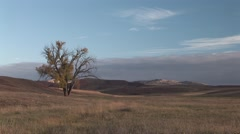 Prairie Wind Cave National Park Fall Cottonwood Stock Footage