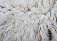 woolly sheep fleece for background - stock photo