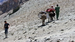 Donkeys come down. 1280x720 Stock Footage