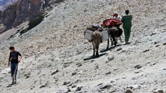 Donkeys come down Stock Footage