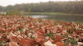 Autumn motives with leaves and  river. Dolly shot   HD Footage