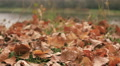 Red fallen autumn leaves and river. Dolly shot  in windy day HD Footage