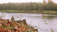 Stock Video Footage of Red autumn leaves and river. Dolly shot  in windy day