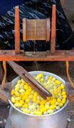 Silk production process, making of the cocoon silkworm from egg to worm Stock Photos
