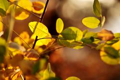 Abstract defocused autumn leaves lighted by the sun Stock Photos