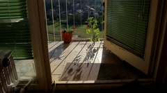 4. Tomato plant grown on the terrace. Beautiful scenes. Sequence from 3 videos. Stock Footage