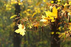 Tree branch and leaf fall in forest Stock Photos