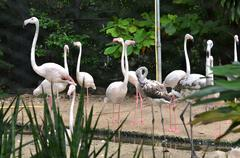 Flock of flamingos Stock Photos