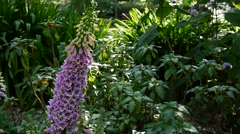 Botanical Gardens Australia Pan Shot 50p Stock Footage