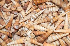 several seashells on the beach - stock photo
