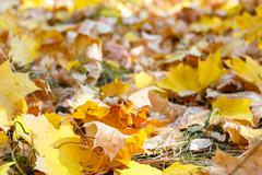Autumn fallen leaves - stock photo