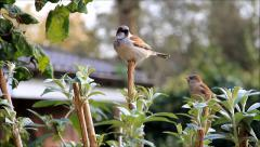 Tit sitting on a branch and looks around Stock Footage