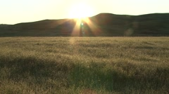Prairie Wind Cave National Park Spring Sunrise Dew Morning Stock Footage