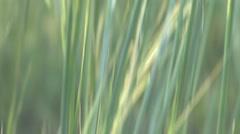 Grasses Wind Cave National Park Summer Tilt Up Stock Footage