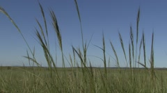 Grasses Wind Cave National Park Summer Zoom In Stock Footage