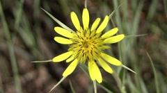 Forbs Black Hills Summer - stock footage
