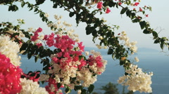 flowers in front of the ocean - stock footage