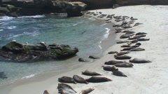 Seal Many Resting Spring - stock footage