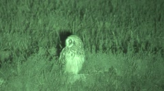 Short-eared Owl Resting Summer Night Infrared Stock Footage