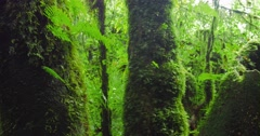 Mossy trees in humid climate of tropical forest - stock footage