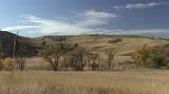 Prairie Custer State Park Fall - stock footage