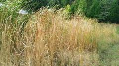 Tennessee Marsh (Wetland) Stock Footage