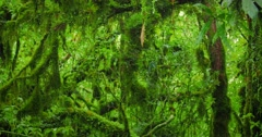 Wet and mossy tree  branches in jungle forest  Stock Footage