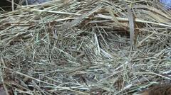 Prairie Vole Lone Fall Floodlight Stock Footage