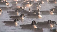Canada Goose Winter Mist Steam - stock footage
