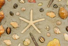Starfish and shells to decorate on cement wall Stock Photos