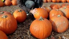Finding the right pumpkin Stock Footage