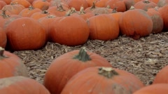 Panning over the pumpkin patch Stock Footage