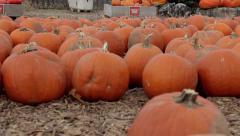 Rack focus pumpkin patch Stock Footage