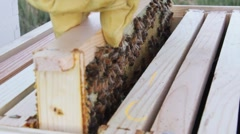 Removing Bees From the Hive HD Stock Footage