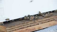 Honey Bees HD Stock Footage
