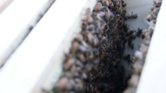 Honey bees close up in the hive HD.mp4 Stock Footage