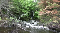 Pinetree Forest Waterfall Peaking View Stock Footage