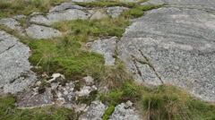 Smooth rock, moss and grass. Canadian Shield. Stock Footage