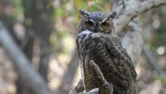 Owl Wink to Camera - stock footage