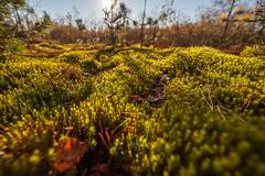 autumn moss closeup nature background - stock photo