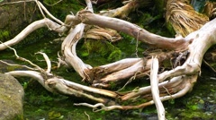 The Creek and Dry Wood Stock Footage