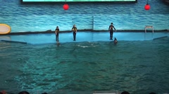 Dolphin Jump at Dolphin show in china Stock Footage