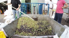Farmers bring their olives to Alaata olive press facility Stock Footage