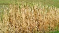 Tennessee Marsh (Wetland) - stock footage