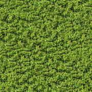 Green Leafy Bush. Seamless Texture. - stock photo