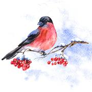 Winter Watercolor background with bullfinches - stock illustration