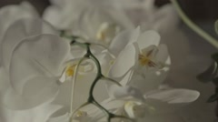 Wedding orchid Stock Footage