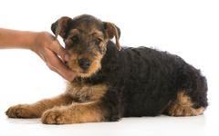 Hands holding puppy Stock Photos