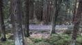 Narrow gauge rails tilt in mountain range forest Harz HD Footage