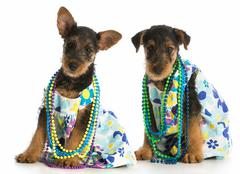 Two female puppies Stock Photos
